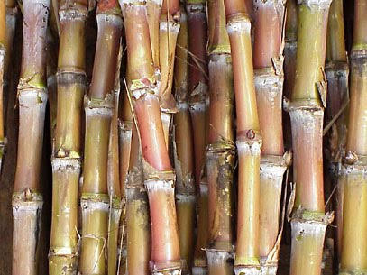 picture of sugar cane for breakfast